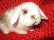 Продам декоративных крольчат!!!