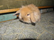 Декоративные кролики,  клетки для кроликов корма