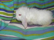 Декоративные кролики,  клетки для кроликов,  корма