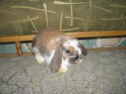 Декоративные кролики,  клетки,  корма