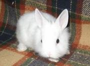 Этот кролик ждет именно Вас!