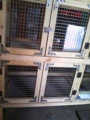 Купить клетки для кроликов + бункерные кормушки + маточники